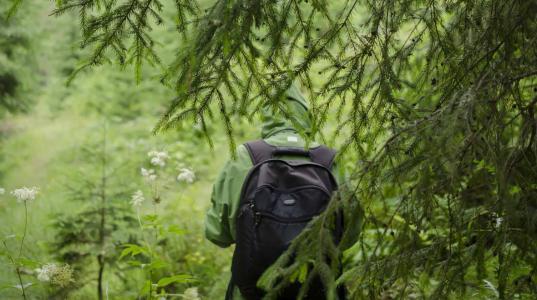 Пенсионер из Череповца заблудился и провел несколько дней в лесах Белозерского района