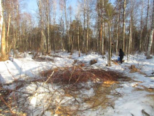 В Вожегодском районе задержали мужчину, который незаконно срубил  деревья для отопления рыбацкого домика