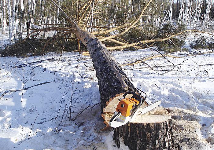 Четырех «черных лесорубов» задержали в Бабушкинском районе