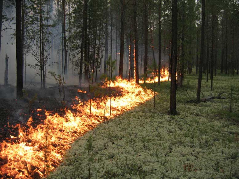 Пожары нанесли вологодским лесам ущерб в 1,8 млн рублей