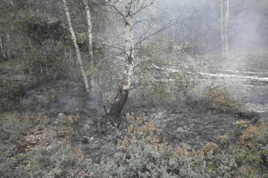 Пожар на торфяниках под Вологдой планируют потушить до 14 августа