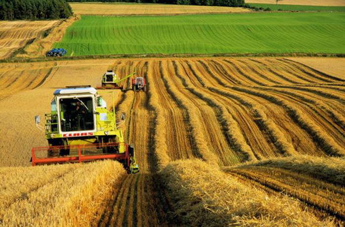 Вологодская область получит 71,5 млн рублей на развитие растениеводства