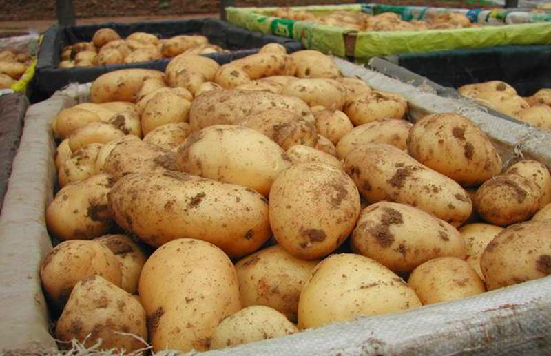 Рост цен на картофель и говядину удивил вологодское правительство