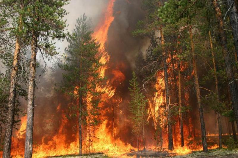 В Вологодской области установлен особый противопожарный режим