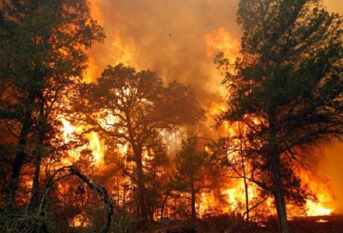 Первый лесной пожар зафиксирован в Вологодской области