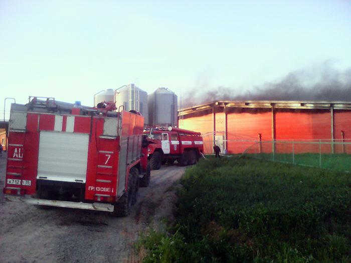 В Грязовецком районе пожарные спасли из огня больше тысячи свиней