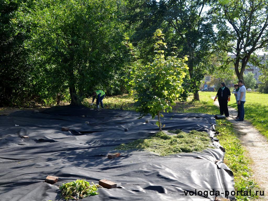 В Ковыринском парке ставят эксперимент по борьбе с борщевиком