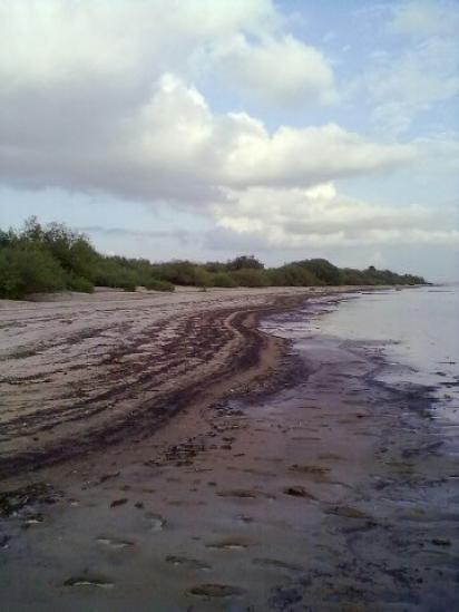 Кубенское озеро пересохло