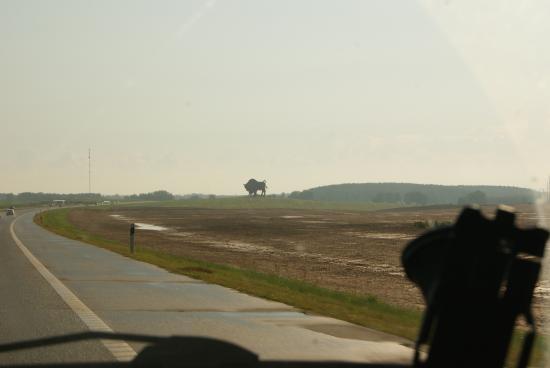 На въезде в Брестскую область увидели огромную фигуру одного из ее символов -  зубра...