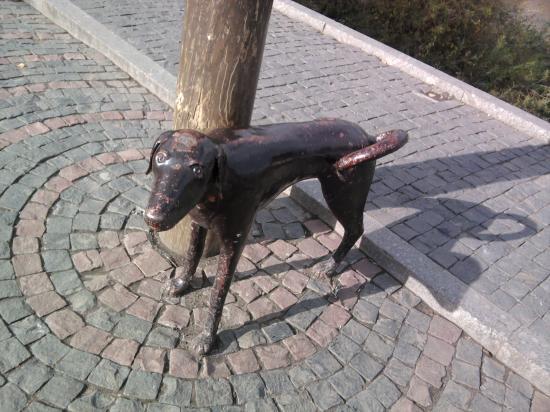 А собачка-то линяет!