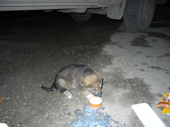 Немного теплого молока в дорогу...
