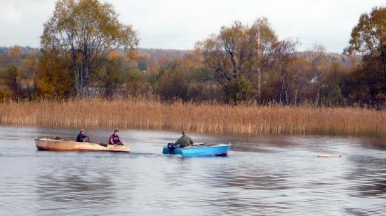 Живут люди почти на плаву. Забавная ситуация. Мужики везли на лодке свинью. Она вырвалась и уплыла. Мужики спасают. Или просто ловят :)