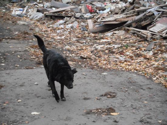Старый бездомный пес охраняет то, что когда-то было его домом