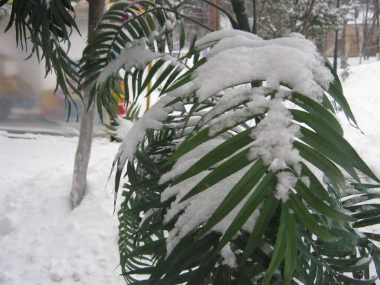 """и откуда такие растения в Вологде? Но снег и им """"к лицу"""""""