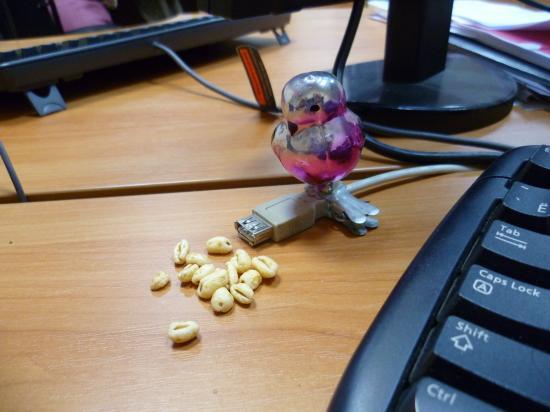 На столе на рабочем пернатые лица Нравится очень им наша пшеница!!!