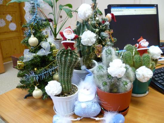 Дед Мороз у нас выпил, на кактус полез,  стройный, колючий в офисе ЛЕС!!!