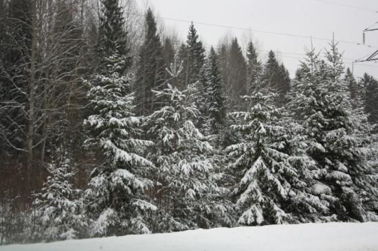 А вот все, что рядом с дорогой, очень даже красивенько выглядит. Елочки в снегу... Новый год скоро :)