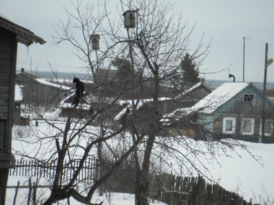 Пока птичек нет сам на дереве посижу, помурлычу...