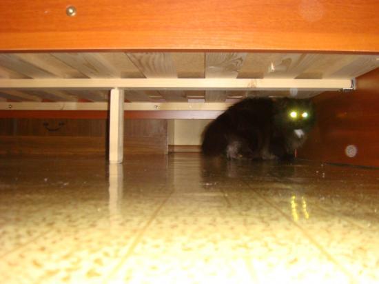 Это не автомобиль из тоннеля выезжает, а наш всеми любимый кот Маркиз из под нового дивана
