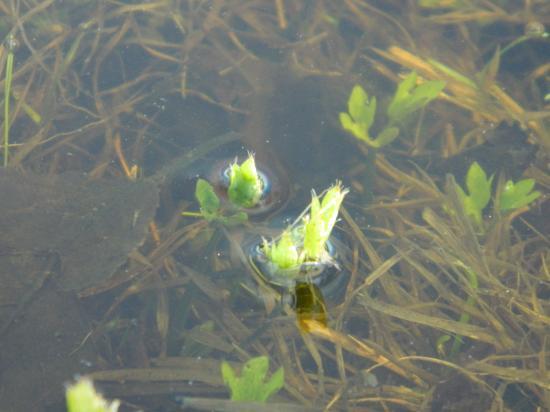 Сквозь воду пробивается травка.
