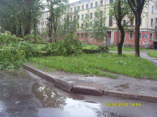 Упавший громадный тополь перекрыл улицу Беляева