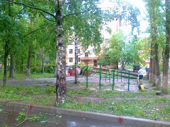 Несколько деревьев было повалено сильным ветром