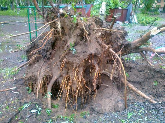 Вырвано с корнем