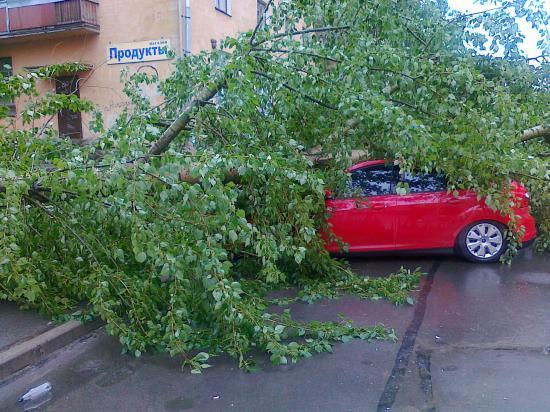 При падении дерева повреждён автомобиль