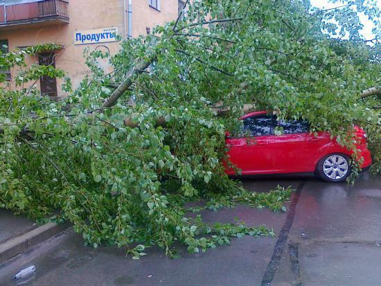 Еще один тополь обрушился на машину, припаркованную во вдоре по улице Казакова