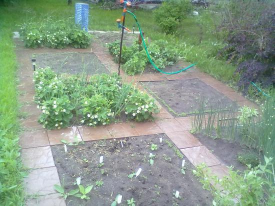 А вот такой огородик я себе тоже забабахаю! Ходить по плитке удобно!!