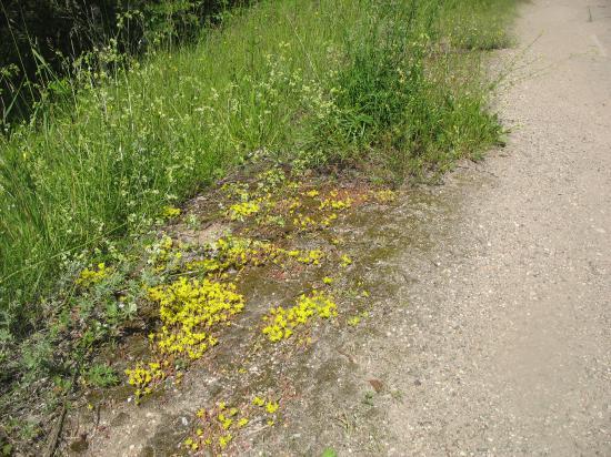 Вот так неприглядно рос дикий мох вдоль проселочной дороги...