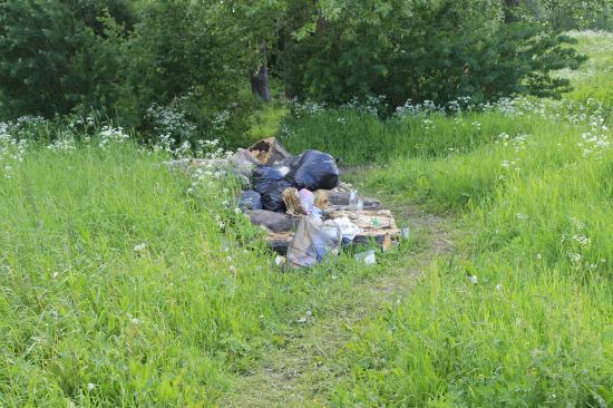Отдыхающие не убирают за собой мусор после пикников в Осановской роще