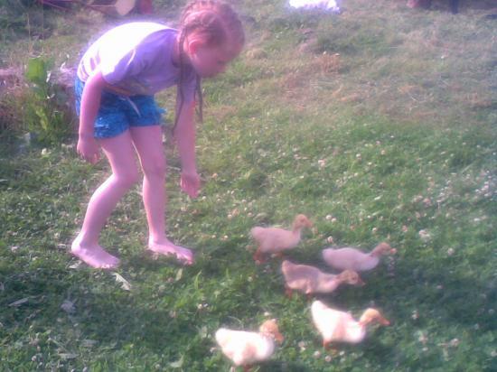 Пасём гусей.Купили 5 маленьких гусят.