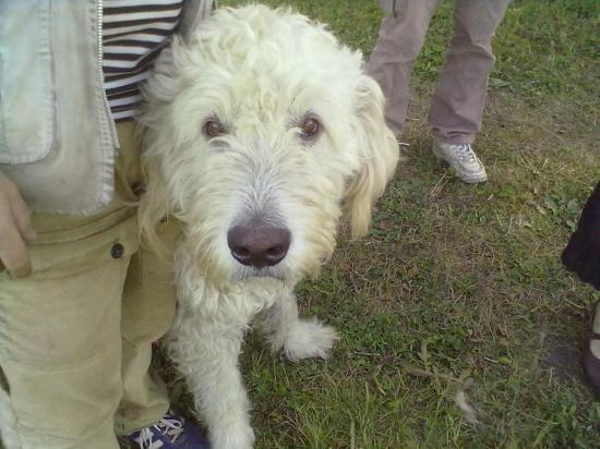 Вместе с Александром нас встретил чудесный пес Один. Это и сторож, и друг, и всеобщий любимец.