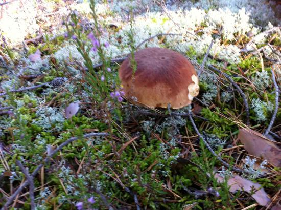 За грибами!