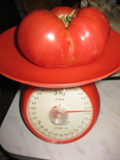 Чудо-помидор