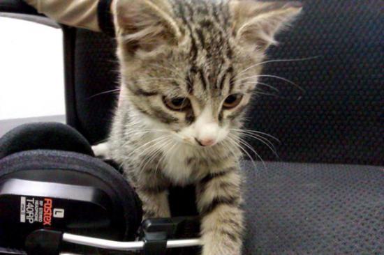 Инжекот. По предварительным данным - парень. Любит провода, всех держит под контролем, интересуется техникой. Предводитель котовьей стаи. кот-инженер, в общем.