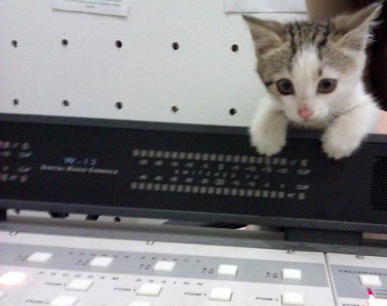 Диджекот. мне кажется девочка, уточненные данные будут позже, после комментариев специалистов. этот кот любит мяукать, шипеть, голосок поставленный. вне эфирки - пуглив и растерян. кот-диджей, в общем