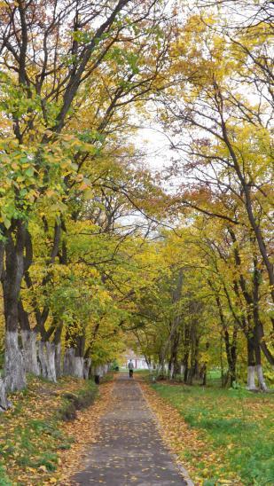 Аллея старого парка