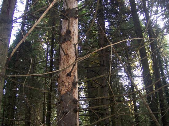 """Например, вот это.   Полное впечатление, что лес давно заброшен и никому до него нет дела. А ведь это не так! За лесом обязаны присматривать специалисты, получающие за это зарплату! И с 2007 года это вот кто: привожу цитату ТВ-7: """"С 2007-го облас"""