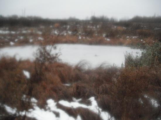 Старый пруд в деревне Ерденево