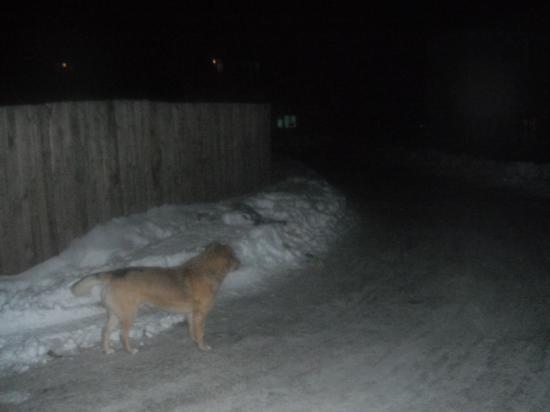 собака прислушиваеться к шуму машин,а вдруг сейчас из-за поворота кто-нибудь резко выскочит,бежать некуда.