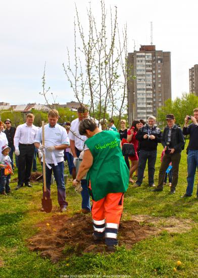 Сажает первое дерево губернатор области Олег Кувшинников