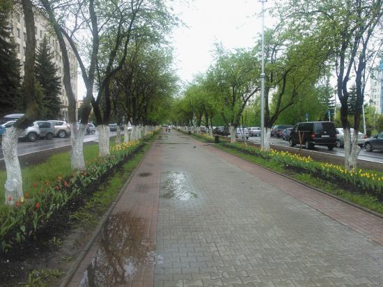 Тюльпаны в Вологде