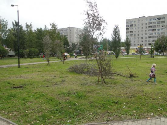 """Падают деревья засохшие. Сквер у """"Элмы""""."""