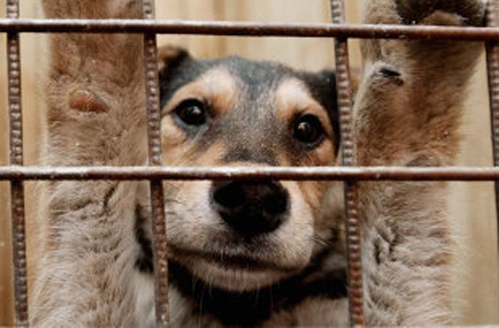 Выставка бездомных животных пройдет в Вологде