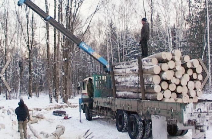 Вологодский полицейский организовал банду «черных лесорубов»
