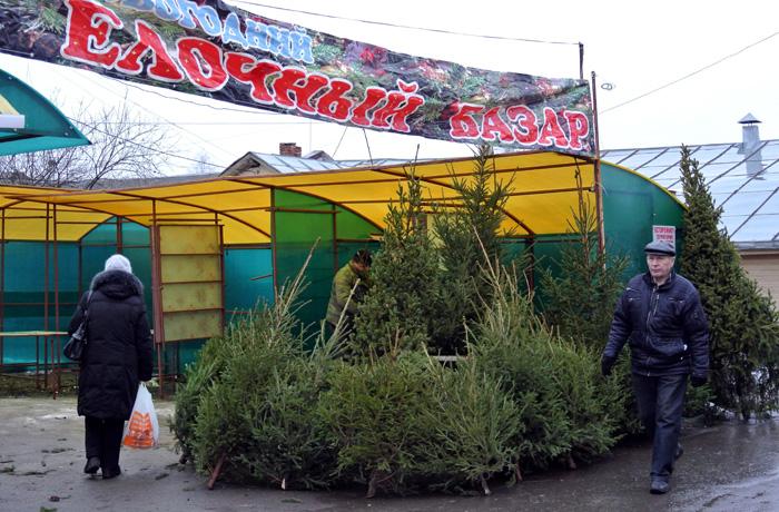В Вологде открылись елочные базары