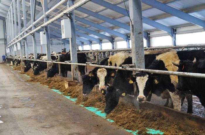 Вологодский губернатор: Надои молока вырастут в следующем году