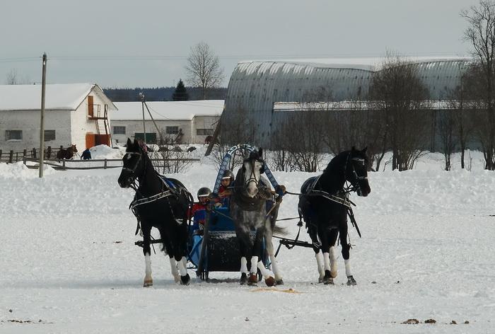 В Вологодском районе пройдут Всероссийские соревнования русских троек